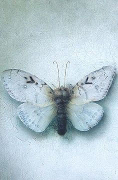 Moth :: shades of blue Bleu Pale, French Blue, Blue Butterfly, Butterfly Kisses, Beautiful Butterflies, Color Themes, Shades Of Blue, Favorite Color, Indigo