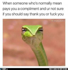 When someone who's normally mean pays you a compliment (Funny Relationship Pictures) - #compliment #mean