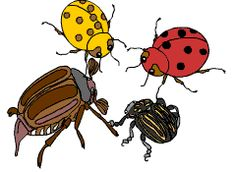 Minibeasts Colouring Sheets Detailed Version Minibeast