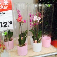 Leuk idee: een orchidee in zo'n hoge glazen vaas!