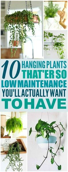 10 low maintenance hanging plants are THE BEST! I& so glad I ., These 10 low maintenance hanging plants are THE BEST! I'm so glad I ., These 10 low maintenance hanging plants are THE BEST! I'm so glad I . Inside Plants, Cool Plants, Plants In The Home, Decorate With Plants Indoors, Plants For Kitchen, Container Gardening, Gardening Tips, Organic Gardening, Vegetable Gardening