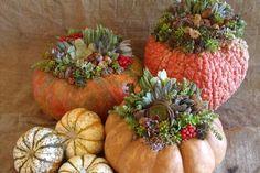 Succulents in pumpkins!  Gorgeous!