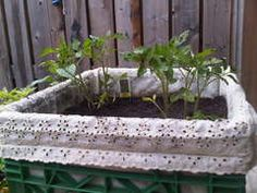 """Milk Crate """"Air-Pot"""" Urban Container Gardening -----this pic is in the comments section==the lady shows how to line the crate with landscaping fabric in the instructable--the lady in the comments used regular fabric==pretty for a patio --i might try this for my carrots"""