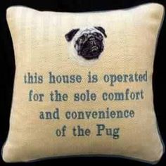 Isn't that the truth! Pug rules.