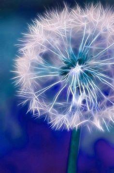 Dandelion with fractal processing. Dandelion Wallpaper, Dandelion Wall Art, Dandelion Painting, Flower Phone Wallpaper, Dandelion Wish, Dandelion Flower, Butterfly Wallpaper, Nature Wallpaper, Dandelion Pictures