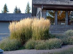 Calamagrostis x acutiflora 'Karl Foerster' like the height differences and using grass as an anchor.