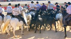 #Cheval #Horse #Pferd #JeuxCamarguais #Camargue #Gard #Occitanie #TourismeOccitanie