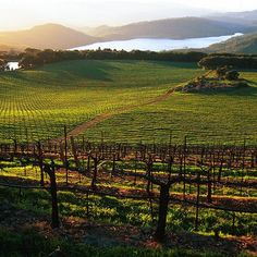 33 Best #Napa Valley #Wineries to Visit