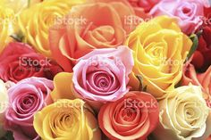 Mixed rose bouquet royalty-free stock photo