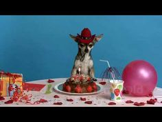 For The Best Birthday Party Ideas In Springfield Missouri Choose
