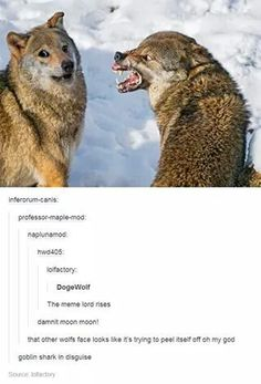 Why does it look like someone Photoshopped doge's face onto the left wolf All Meme, Stupid Funny Memes, Haha Funny, Funny Posts, Funny Cute, Hilarious, Funny Stuff, Funny Animal Memes, Cute Funny Animals