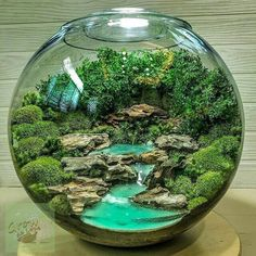 Likes, 33 Kommentare - Terrarium Imaginarium (Tara Smith. - Likes, 33 Kommentare – Terrarium Imaginarium (Tara Smith. Terrarium Scene, Fairy Terrarium, Cactus Terrarium, Terrarium Ideas, Terrarium Decorations, Water Terrarium, Terrarium Wedding, Fish Tank Terrarium, Bottle Terrarium