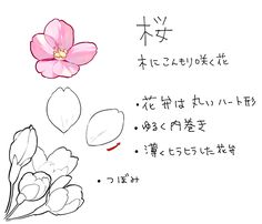 How to Draw 4 Japanese Flowers and Plants (Camellia, Otome Camellia, Hydrangea, Cherry Blossom) Drawing Lessons, Drawing Techniques, Drawing Tips, Drawing Reference, Digital Painting Tutorials, Digital Art Tutorial, Flower Drawing Tutorials, Art Tutorials, Plant Drawing