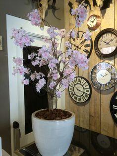 Prachtige bloesemboom, genoeg op voorraad! Bericht (www.annefleurs.nl) of kom langs bij Bellisimo wonen & genieten in Naaldwijk.