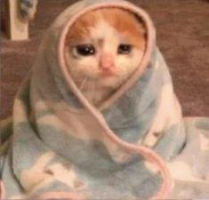 Funny Animal Jokes, Cute Funny Animals, Animal Memes, Funny Cats, Sad Cat Meme, Funny Science Jokes, Funny Emoji, Silly Cats, Cute Baby Cats