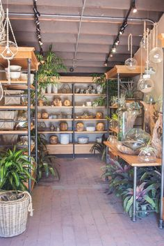 When your dreams and prayers are answered with a room full of exotic plants.  Check out our new air plant pop-up shop near the front entrance.