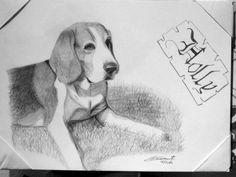 Holly, il beagle - matita su cartoncino