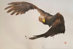 Works by Karl Martens: HEAD STUDY - WHITE TAILED SEA EAGLE , WHITE TAILED SEA EAGLE , WHITE TAILED SEA EAGLE , GOSHAWK , WHITE TAILED SEA EAGLE , MARSH HARRIER , WHITE TAILED SEA EAGLE , MARSH HARRIER , LONG TAILED TIT