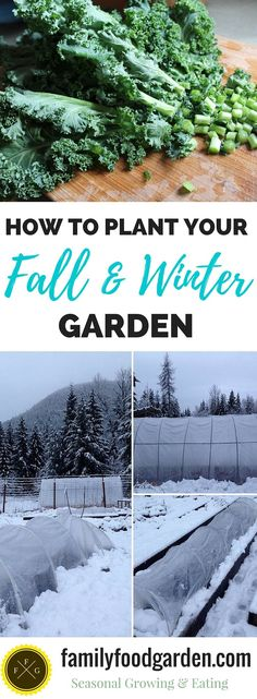 Mid to late summer is the perfect time to get your fall/winter garden crops in the ground. There are a few things to consider when planning…