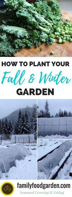 1000 Ideas About Winter Garden On Pinterest Gardening Winter Plants And Topiaries