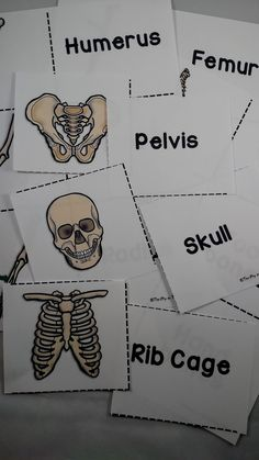 I created this skeletal system product  after struggling to find something like this for my own class. You can use the unit around...