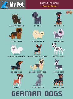 :: German Dogs :: From GERMANY: Affenpinscher, Poodle, Doberman, Leonberger, Pomeranian, Keeshond, American Eskimo, Miniature Pinscher, Great Dane, Dachshund, German Shepherd, Schnauzer, Boxer, Weimeraner, Rottweiler. #MrbigninkPage #KunLhingJingleBell