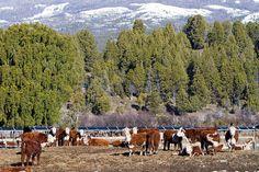 Garruchos Agropecuaria, es una empresa del Grupo Insud (cuyo CEO es Hugo Sigman) se especializa en ganadería bovina para la producción de carne y leche y agricultura. En la actividad ganadera apuesta por el mejoramiento genético de las razas Hereford, Angus Braford, Brangus.