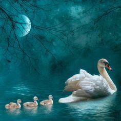 redwingjohnny:  Moonlit swim byLyn Evans