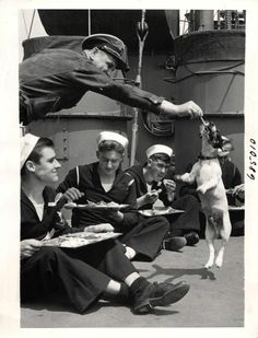 """1943- """"Salty"""", mascot dog of a U.S. Navy vessel, jumps for treat as sailors sit down for """"chow""""."""