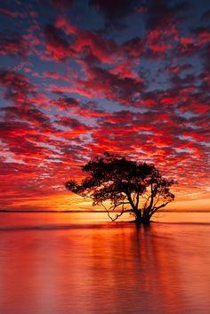 Anni K - Google+ - Landscape Photography, Australia, Nudgee Beach Sunrise -…