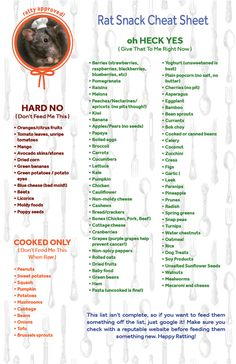 I made a cheat sheet of good and bad foods from all the ratty websites, hope this is helpful. Rat Cage Diy, Pet Rat Cages, Rata Dumbo, Rat Facts, Diy Rat Toys, Pet Rodents, Hamsters, Rat Care, Rat House