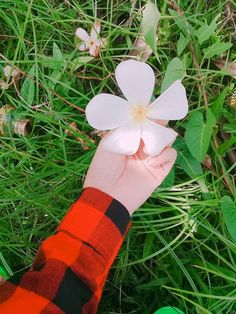 Hand Pictures, Special Pictures, Cute Baby Pictures, Hand Pics, Spring Aesthetic, Sky Aesthetic, Girls With Flowers, Flowers For You, Hand Photography