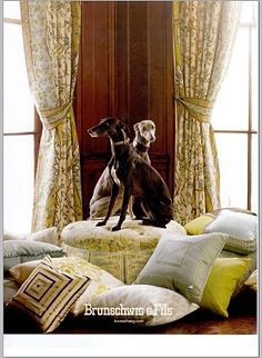Greyhounds?