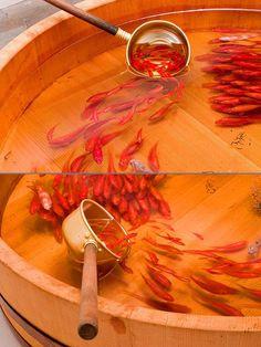 Riusuke Fukahori. Increíble artista!! Vayan al Link y vean el video. http://www.techeblog.com/index.php/tech-gadget/you-won-t-believe-these-ultra-realistic-fish-are-just-an-illusion