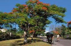Madagascar Guide - Guide - Découverte - L'Est - De Tananarive à Tamatave - Tamatave
