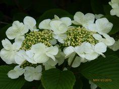 Flowering bush on the grounds SoHa