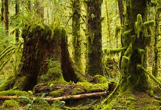 Hoh Rain Forest, Olympic National Park, WA. Every hike/walk we took made me feel like I was in another world!