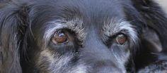 Pet Health: Euthanasia decisions involve quality-of-life considerations