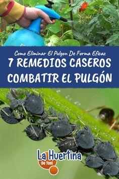 Medicinal Plants, Pest Control, Cactus, Vegetables, Homemade, Gardening, Potted Trees, Succulent Terrarium, Medicinal Herbs