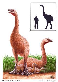 Extinct Birds, Extinct Animals, Prehistoric Animals, Feathered Dinosaurs, Fossils, Elephant, Images, Amazing, Life