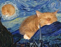 Fat Cats, Cats And Kittens, I Love Cats, Crazy Cats, Animals And Pets, Cute Animals, Ginger Cats, Museum Of Modern Art, Vincent Van Gogh