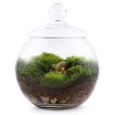 how to grow moss in a jar - Google Search