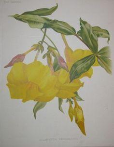 yellow flowers  no. - 10