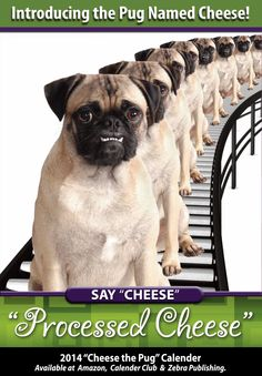 """This is from the """"Say Cheese"""" calendar, available now!"""