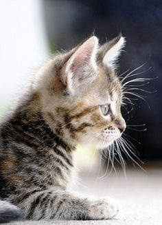 Beautiful picture and so adorable #Cat #Cute