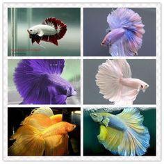 Fish wear a wedding dress, very beautiful skirt. .