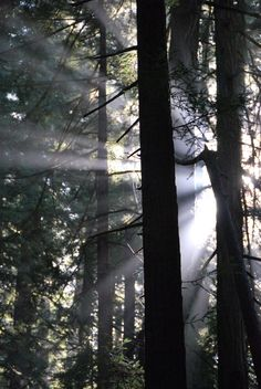 A tantalizing mix of sun and shade in this cool redwood forest. - Photo by: Kevin C, USA