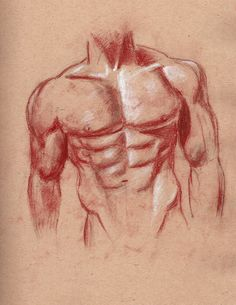 Male torso life drawing from my sketchbook