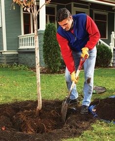Consider a tree's final height and width when planting