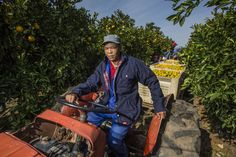 #JonssonWorkwear #Work #Workwear #Africa #Photography #Men #farm #fruits
